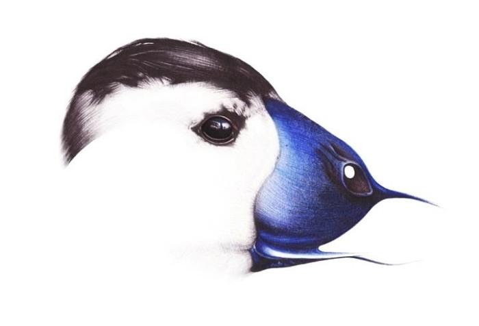 Alexandra Gooch - a bird