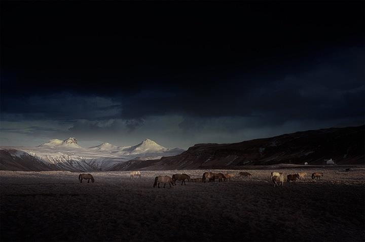 Andy Lee - horses