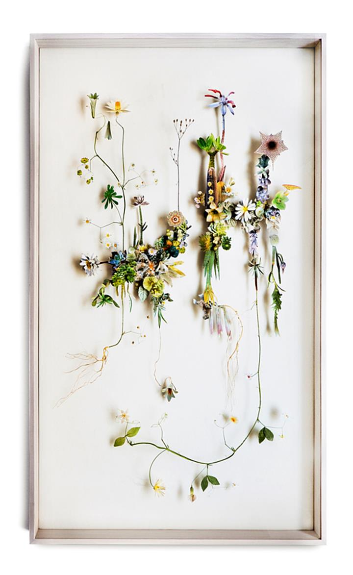 Anne Ten Donkelaar - Flower Constructions7