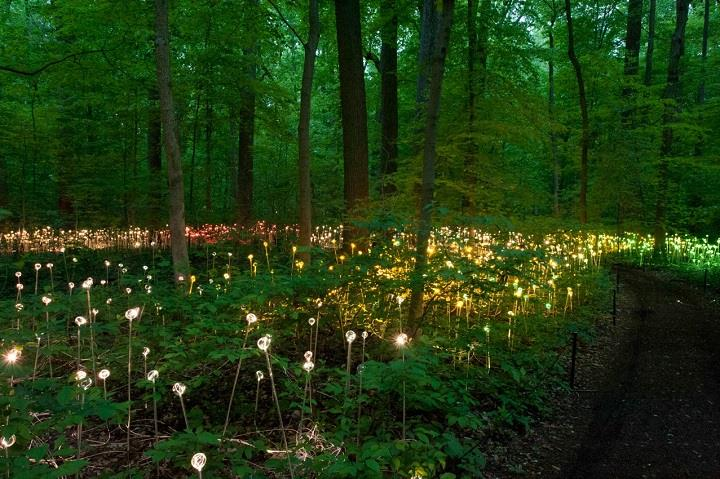 Bruce Munro - green forest