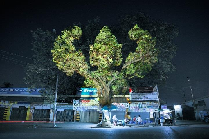 Clement Briend - cambodian trees photography
