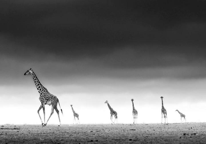 David Yarrow - high