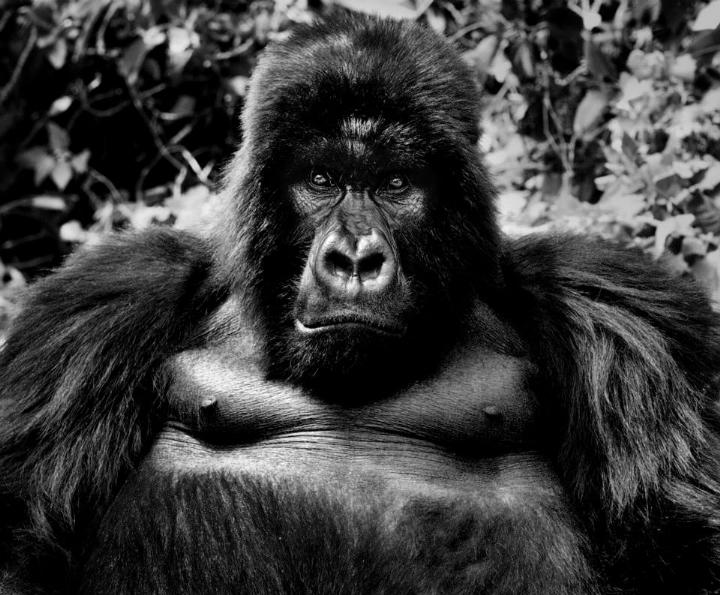 David Yarrow - king kong