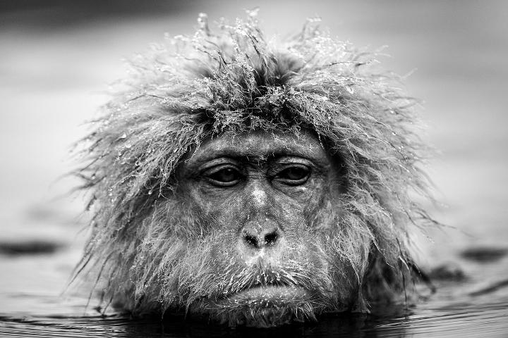 David Yarrow - monkey