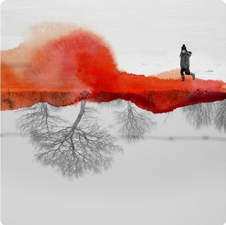 Fabienne Rivory - trees down