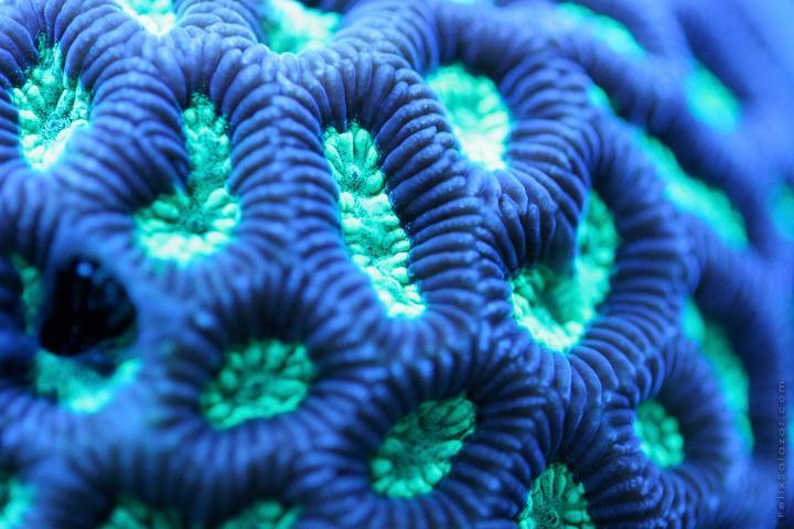 Felix Salazar - Reef 6