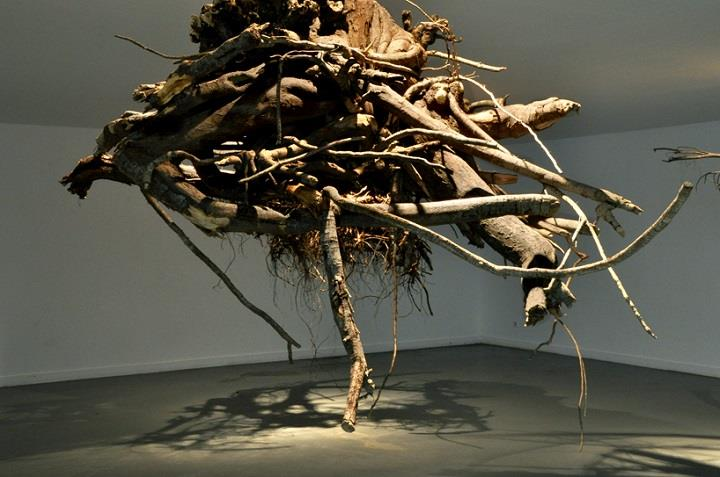 Giuseppe Licari - roots from ceiling