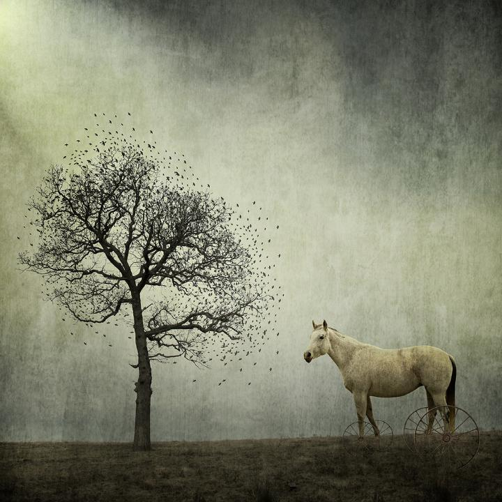 Greg Noblin - horse and tree