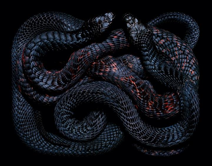 Guido Mocafico - a serpent power