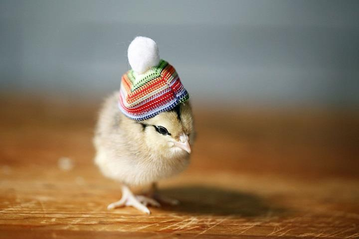 Julie Persons - a chick in a hat