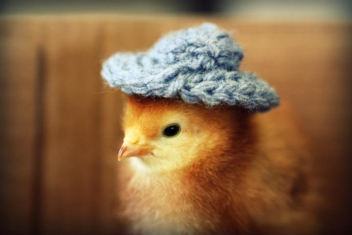 Julie Persons - chick in knitted hat