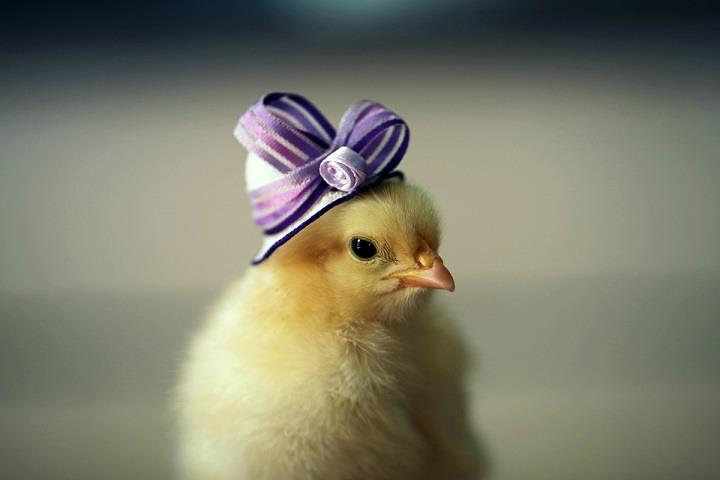 Julie Persons - chick purple hat