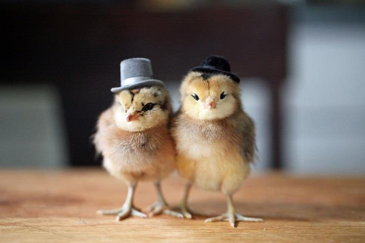 Julie Persons - two chicks in hats