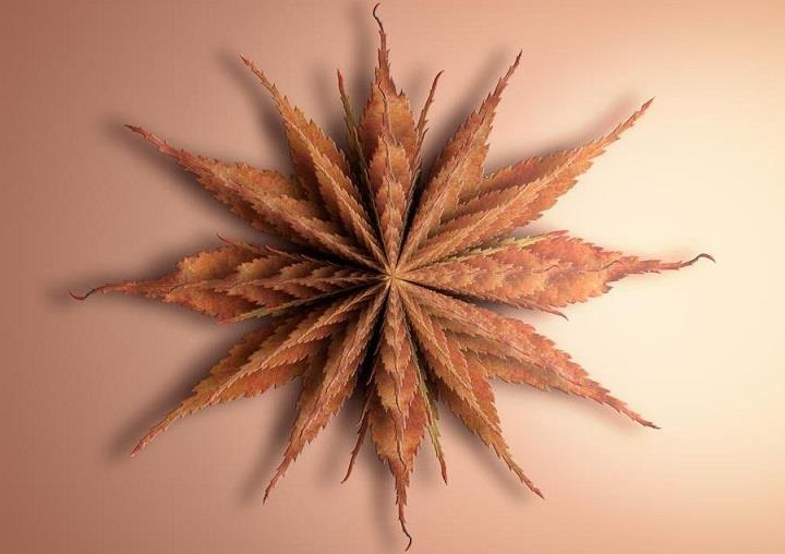 Matt Walford - leaf autumn fractal