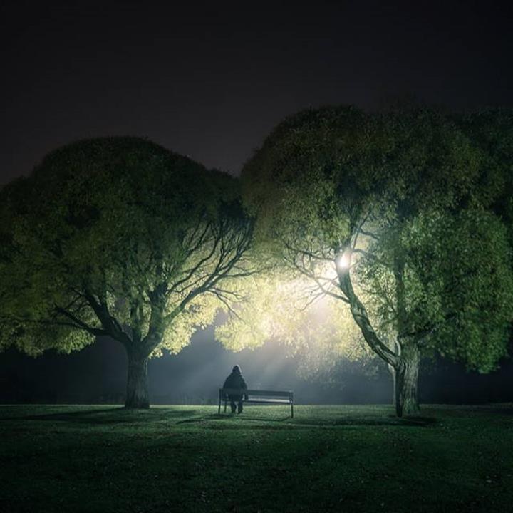 Mikko Lagerstedt trees