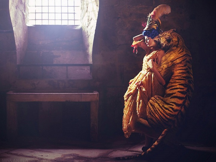 Miss Aniela - a tiger