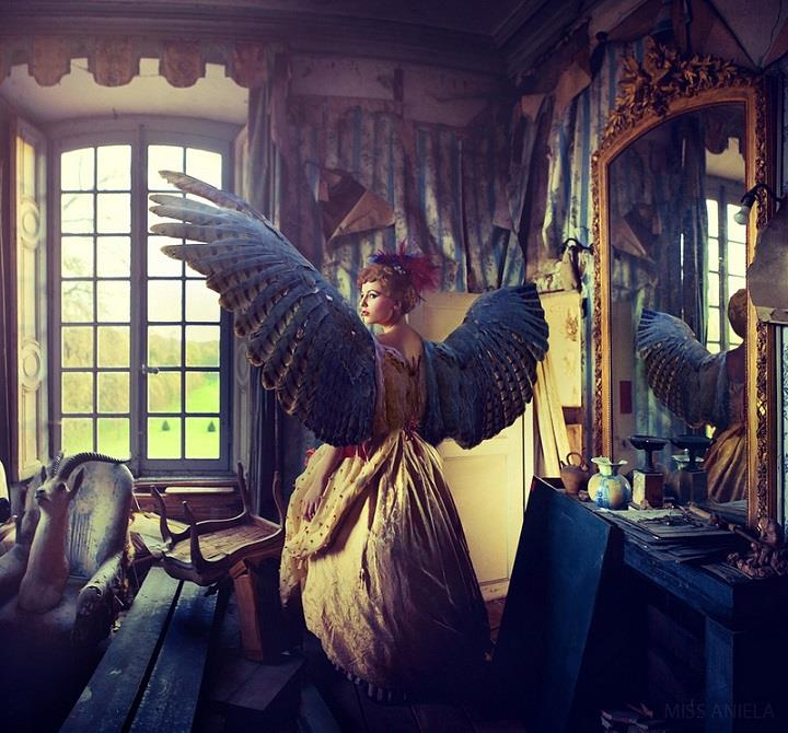Miss Aniela - wings