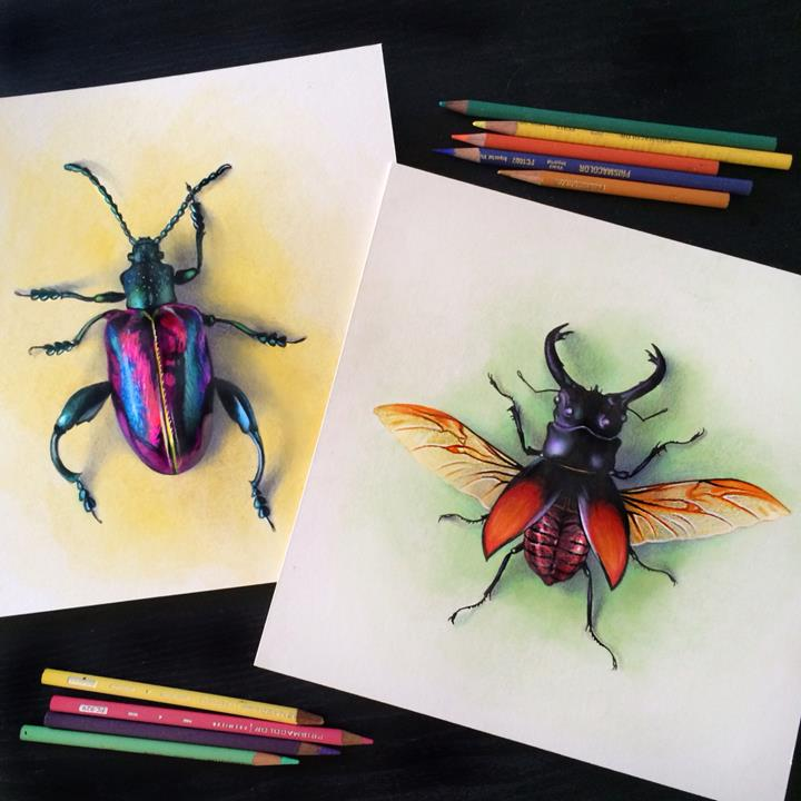 Morgan Davidson - beetles