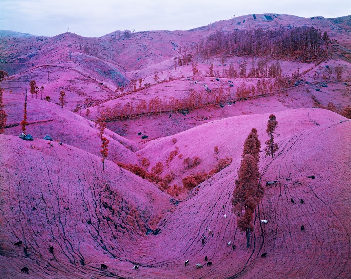Richard Mosse - fields