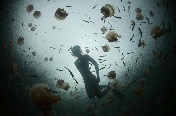 Sarosh Jacob - underwater photography