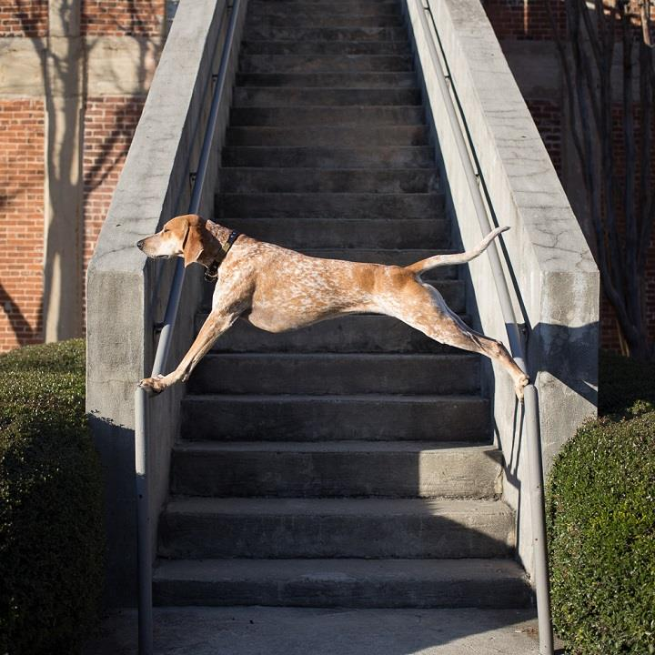 Theron Humphrey - Maddie on stairs