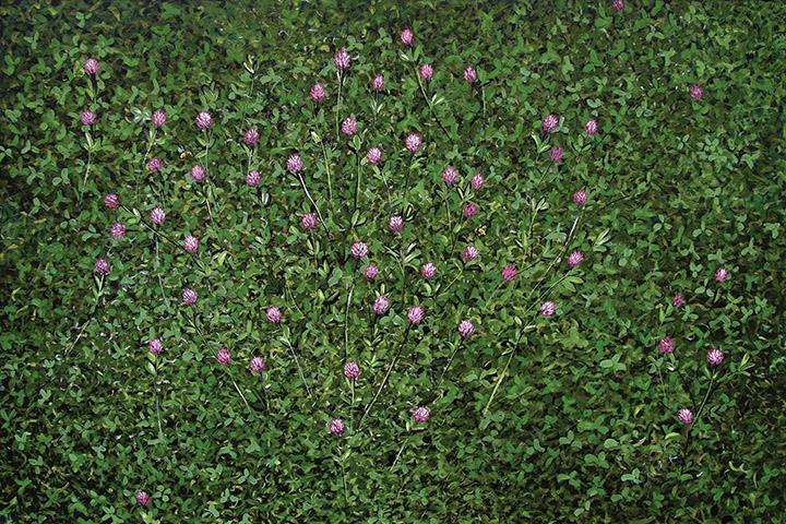 Vojislav Radovanovic - field of red clover