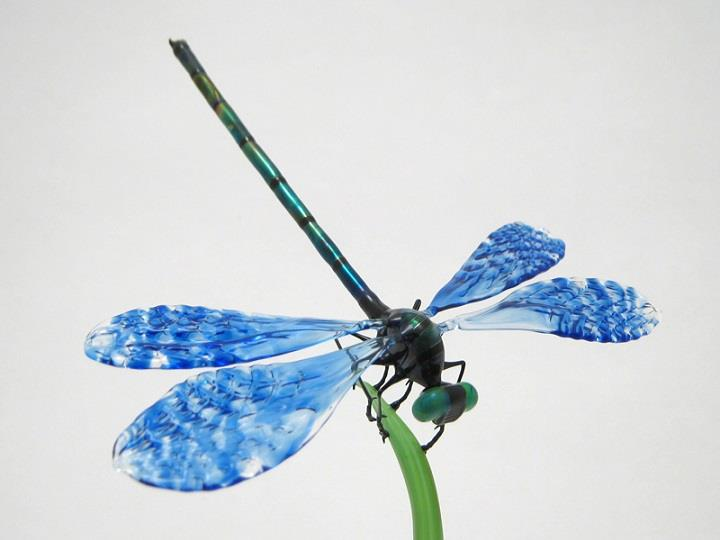 Wesley Fleming - dragonfly