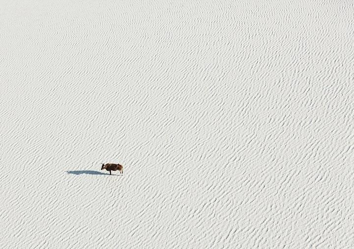 Zack Seckler - wildlife aerial photo
