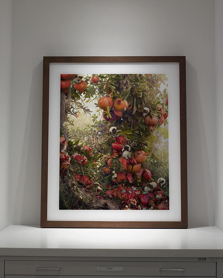 simen johan - fruit tree